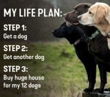 my-life-plan-step1-get-a-dog-step-2-get-56372608